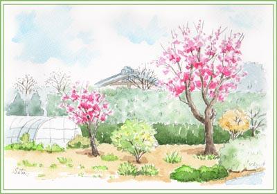 紅梅の咲く道