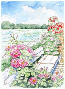 田んぼの見えるバラのお庭