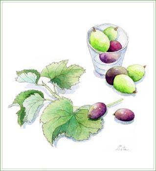 緑と紫のブドウ