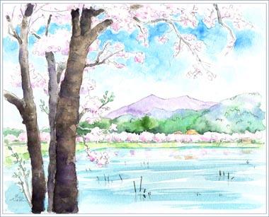 2015年・筑波大池の桜