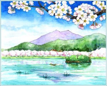 筑波大池の桜 その2