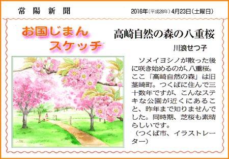 常陽新聞・高崎の森・八重桜