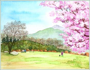 石岡フラワーパークの一本桜