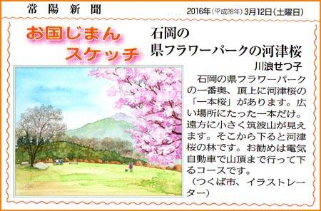 常陽新聞・石岡フラワーパークの河津桜