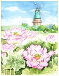 霞ケ浦総合公園のハスの花