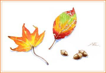 落ち葉とドングリ