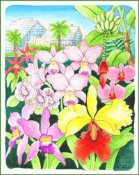筑波実験植物園の蘭展