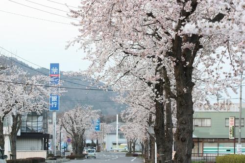 お店の前の桜が満開で☆