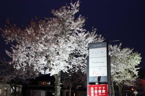 桜を楽しむ会