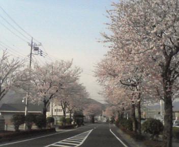 家の前の桜が満開で、書を捨てて街にでよう!!