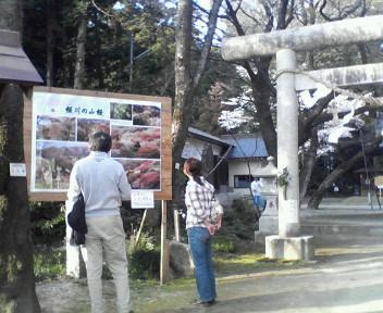 桜川磯辺稲村神社の観光客