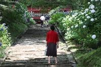 紫陽花寺の賑わい☆雨引観音,楽法寺