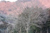 春眠中の雨巻山☆桜川市の里山