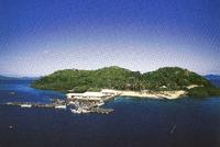 南洋の海からの贈り物♪ゴールドパール 2011/08/21 11:13:33