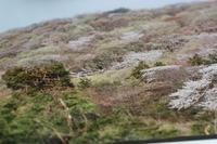 桜川「雨巻山」山里写真展☆山桜のイベントⅡ