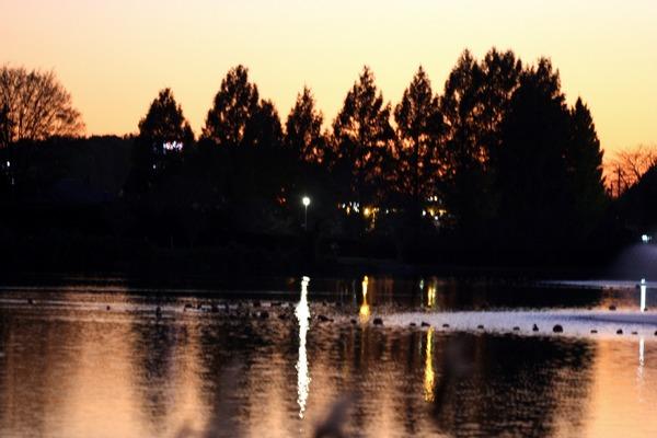 湖畔の夕暮れ☆桜川市上野沼岸