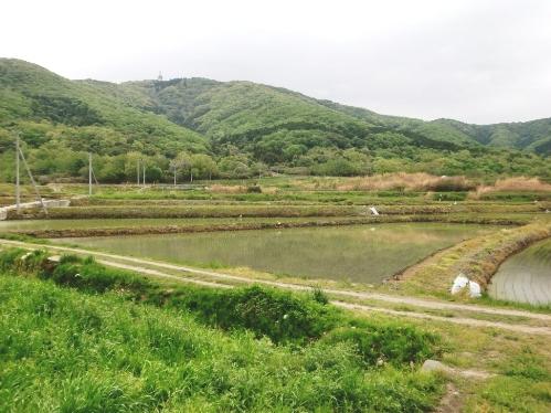つくば・宝筐山(ほうきょうざん)田植え体験