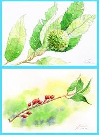 筑波山の植物