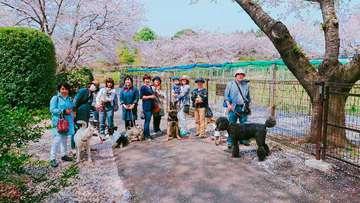 わん旅☆春のお花見散歩&BBQドッグラン!