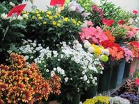 【蕨の小池田生花店】 春のお花入荷してます。