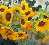 季節を楽しむ夏季の生花★ギフトとしてもご利用頂けます