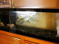 生簀には新鮮な魚が泳ぐ