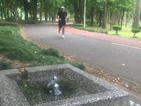 洞峰公園の水の名所(名水)