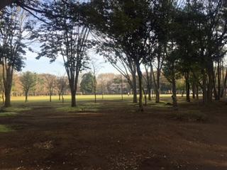 洞峰公園にハマりそうです❗️