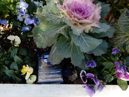 花壇にたくさんのタバコ吸い殻!とても残念です。。。
