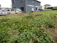 【参加者募集】研究学園グリーンの会の畑のサツマイモ掘りは再々延期しました!