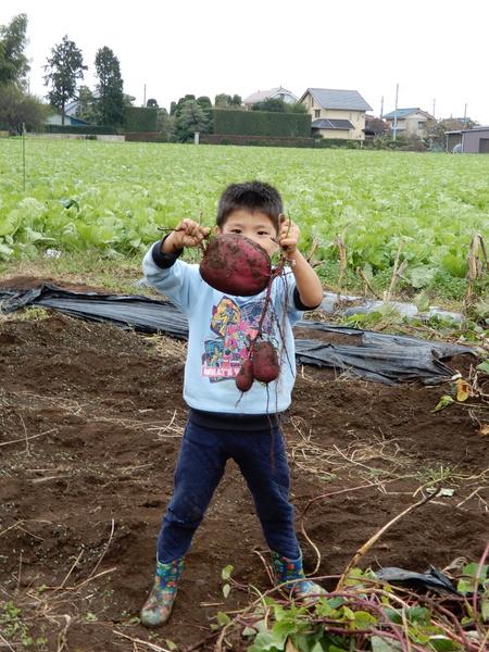 研究学園グリーネックレスでは子供達が参加しイモ掘りを行いました!