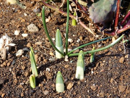 2月定例作業「春を見つけました!」