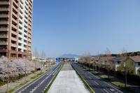 【研究学園の桜5】研究学園からの筑波山と桜!