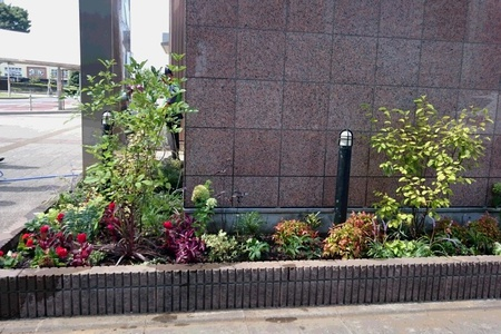 研究学園駅前に一年中花咲く素敵なお庭ができました!