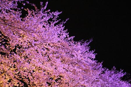 研究学園には桜の名所がたくさんあります!(第3弾)