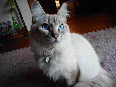 美男子のネコ