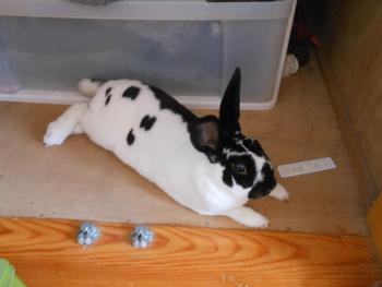 ウサギも暑いよエアコンつけて