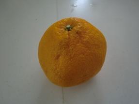 いよかん、オレンジ。。。